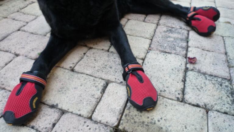 Специальные ботинки для собак