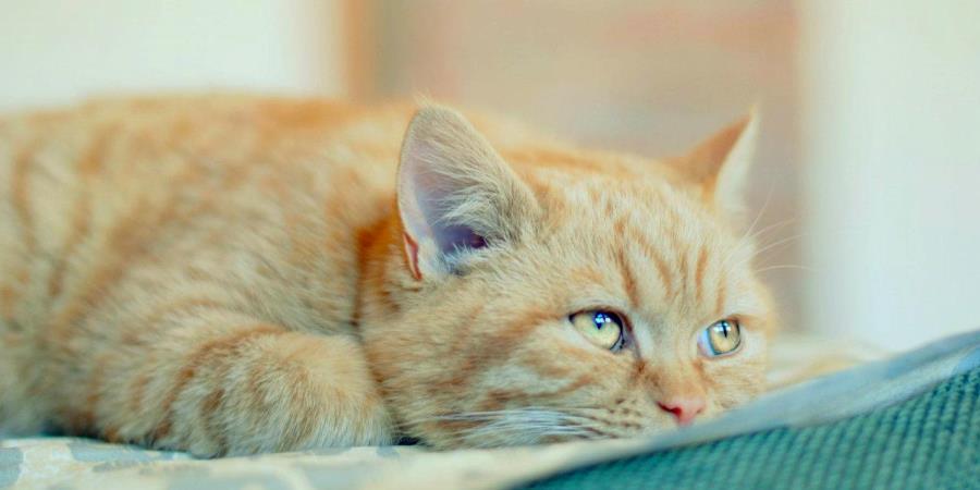 Список болезней котов довольно длинный