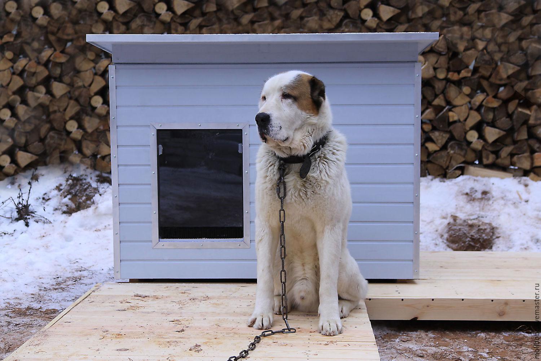 Спокойная собака на цепи