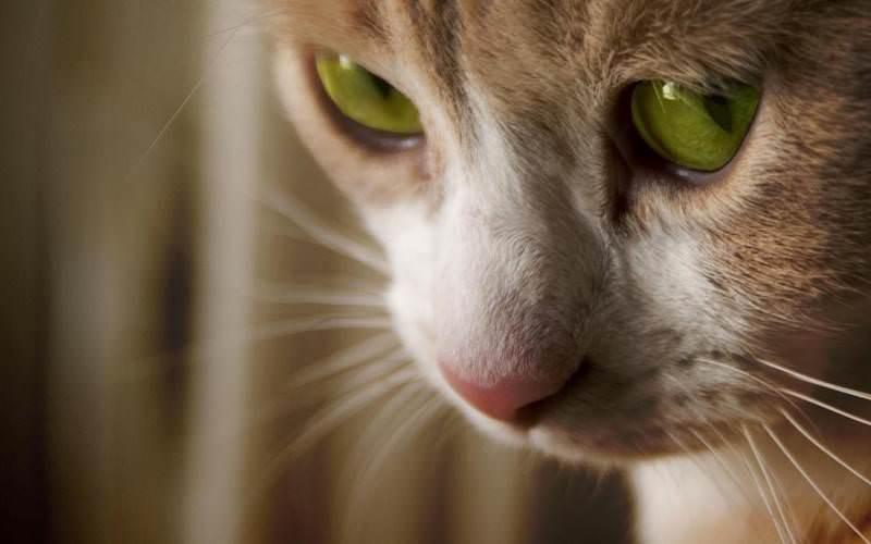 Спреи оказывают неоднозначный эффект на кошачье обоняние, потому их эффект не бывает одинаков