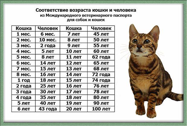 Сравнительная таблица возраста кошки и человека