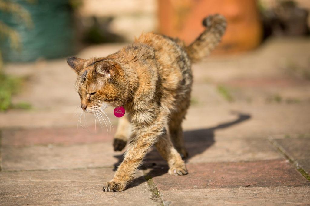 Стареющие коты более чувствительны к некачественной или слишком крепкой пище