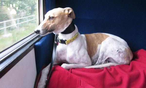 Стоимость провоза собаки в поездах дальнего следования зависит от пройденного расстояния