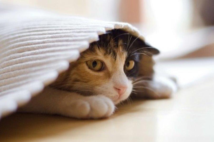 Стресс побуждает кота держаться поближе к месту со своим запахом