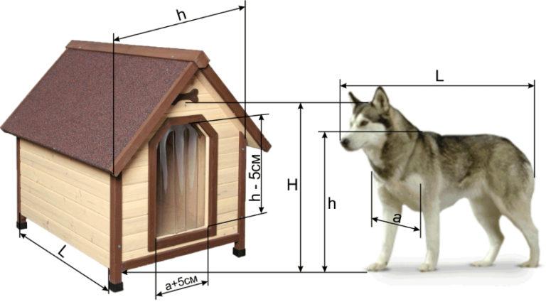 Будка строится не на год и не на два, поэтому важно учитывать, что собака будет расти