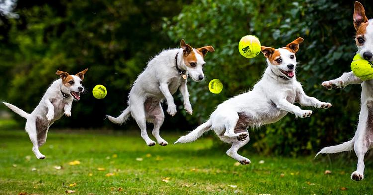 С собакой нужно регулярно играть для выплеска энергии