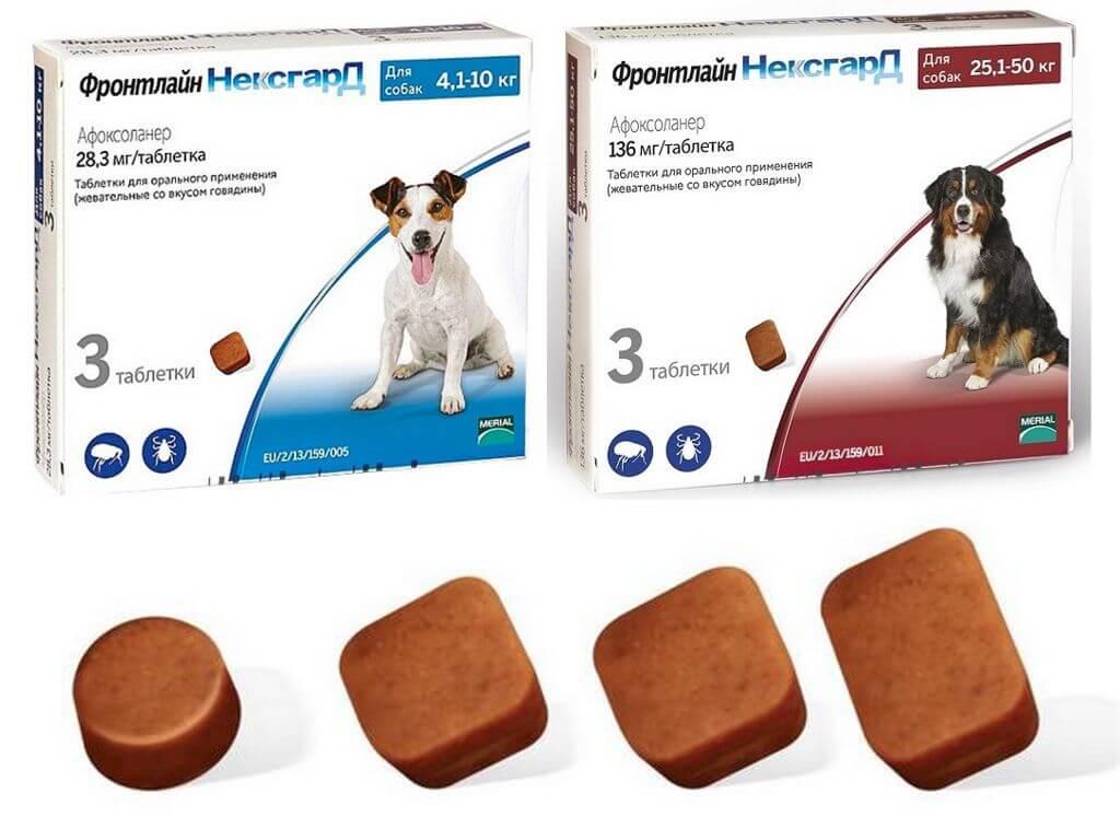 Таблетки Нексгард от беспозвоночных, паразитирующих на собаке