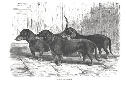 Таксы на рисунке 19 века