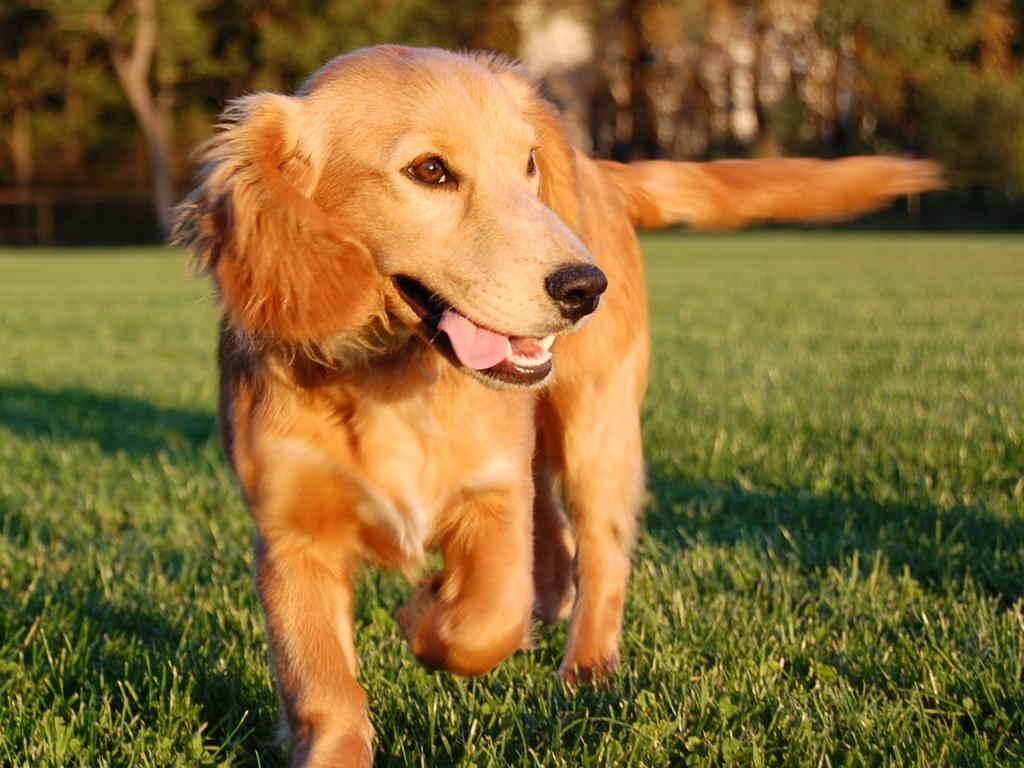 Так как полное излечение от экземы невозможно, важно постоянно поддерживать иммунитет собаки