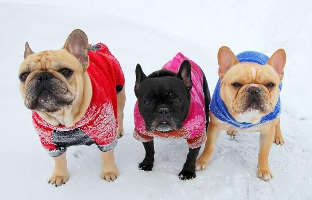 Теплые комбинезоны спасут собаку от переохлаждения в холодное время года