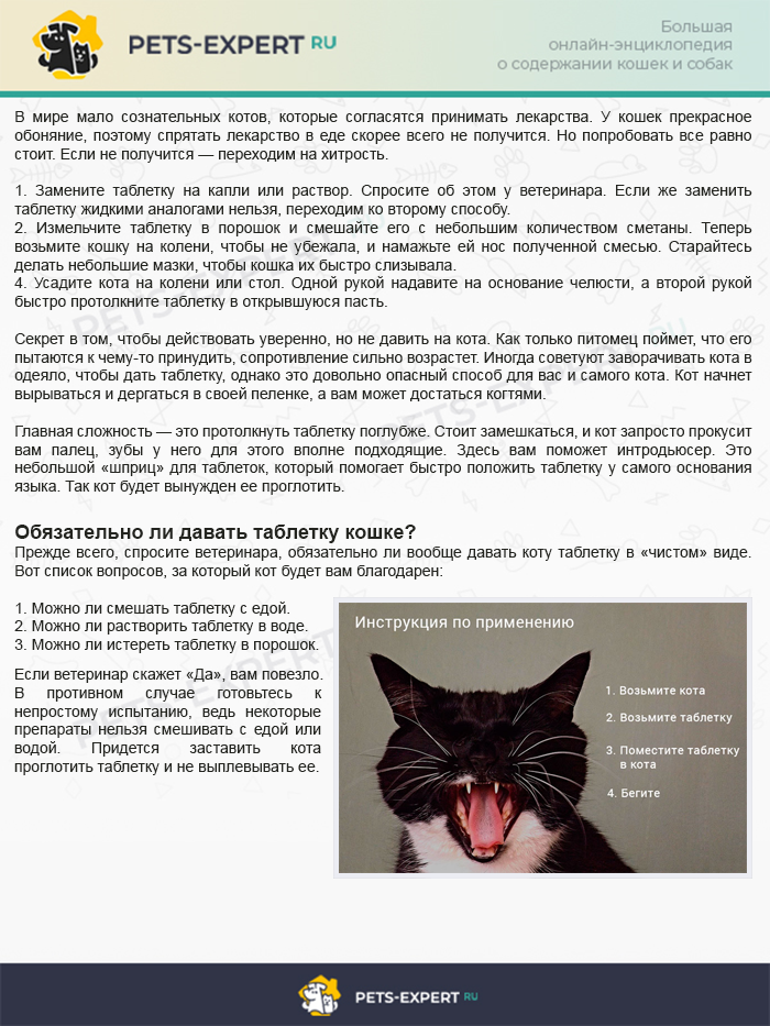Три способа, как дать таблетку коту