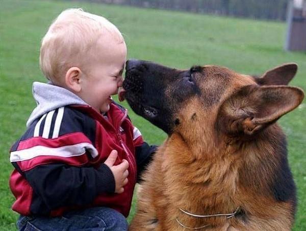 Уберечь от опасностей, умыть, согреть - все это и многое другое может сделать овчарка с вашими детьми, понимая, что они - члены стаи