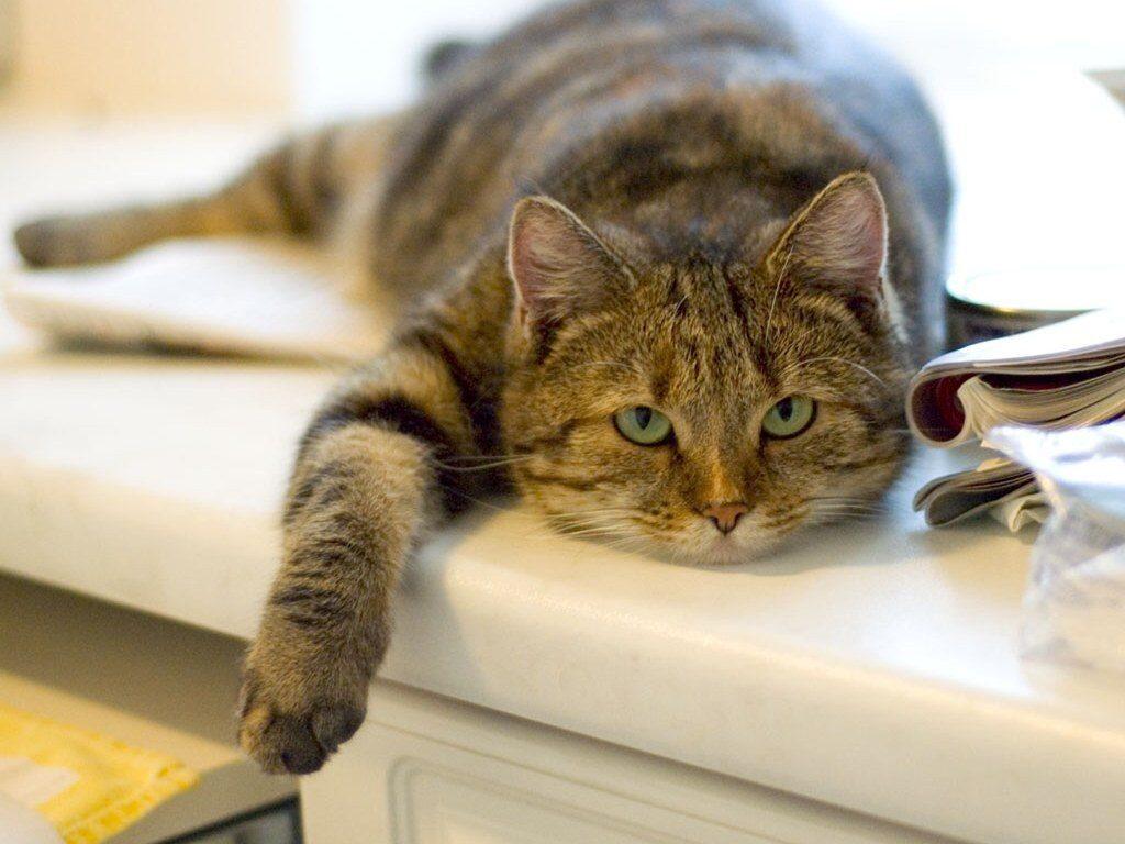 Уделяйте особое внимание самочувствию кота при смене корма
