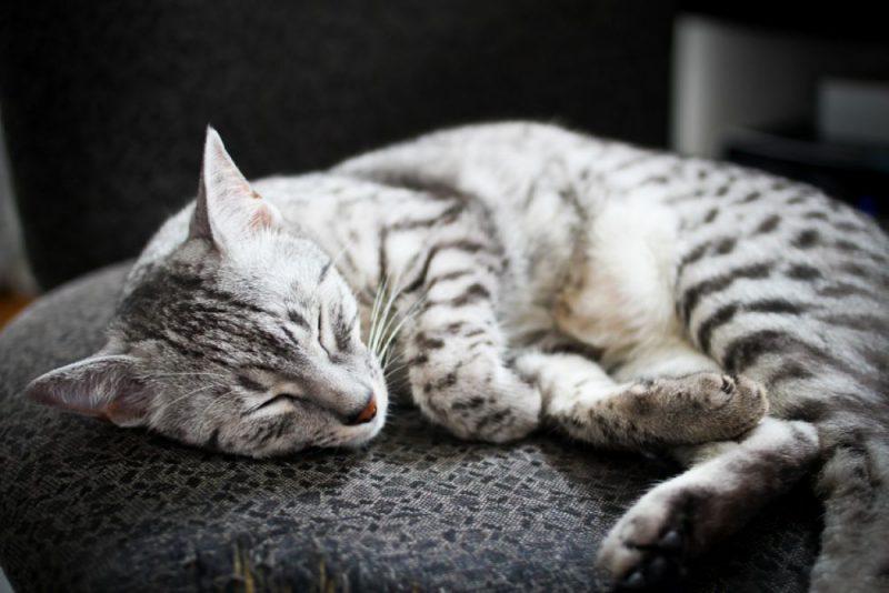 У кошки должно быть своё спальное место