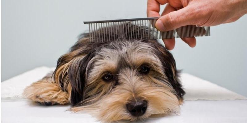 Уход за собакой лучше взять на себя человеку, менее подверженному аллергии
