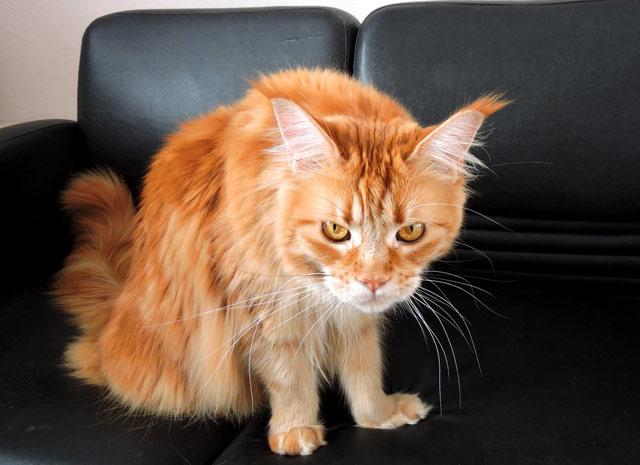 Учтите, что кот будет не в восторге от ваших манипуляций с водой