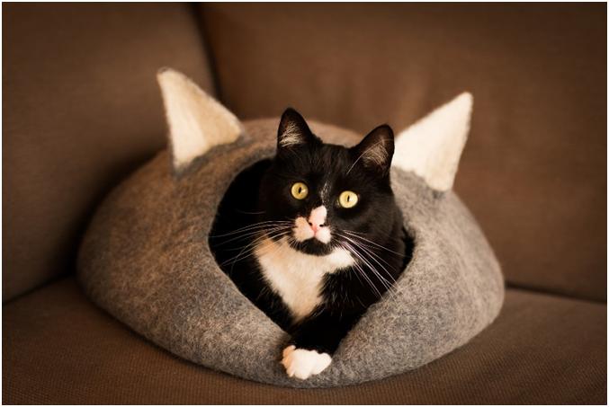 У кошки должно быть специально отведенное место, находящиеся в теплом сухом месте без сквозняков, желательно чтобы это была мягкая подстилка или домик