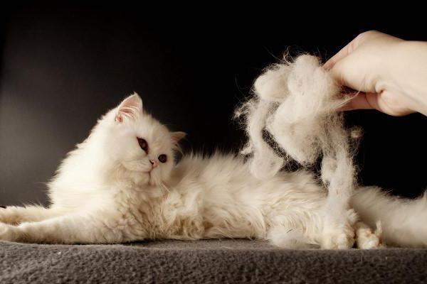 У кошки линька
