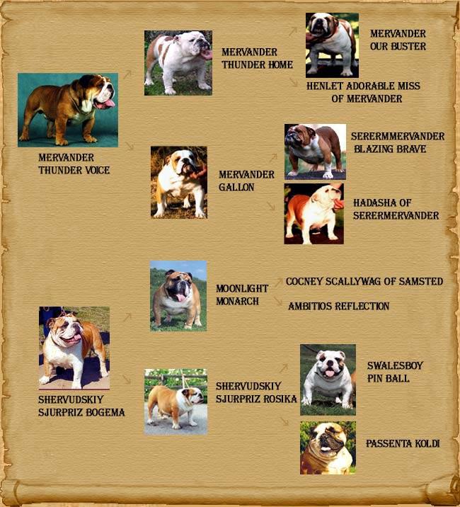 У любого породистого пса есть задокументированная родословная