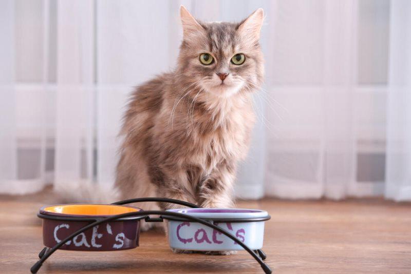 У многих кошек с возрастом меняются предпочтения в пище