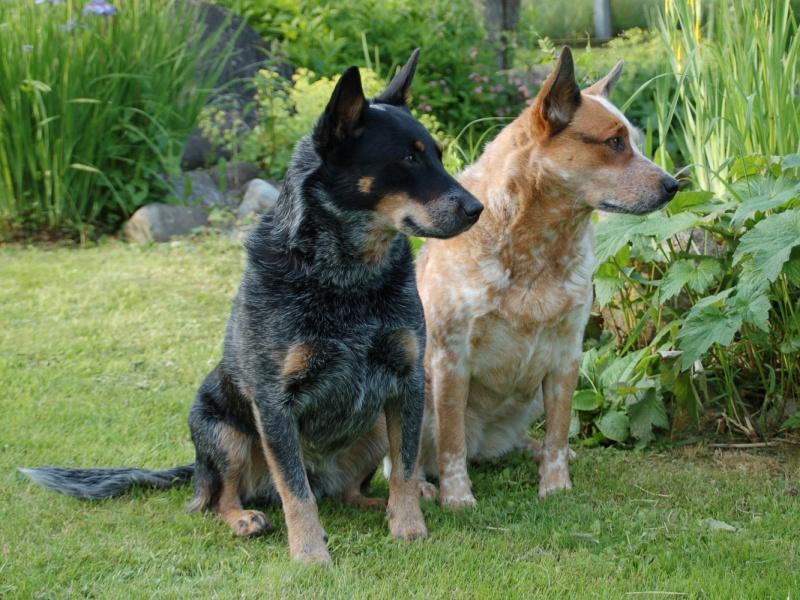 Характер отношений двух собак может варьироваться от сотрудничества до кровной вражды