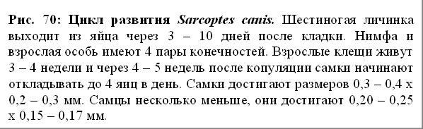 Цикл развития sarcoptes canis