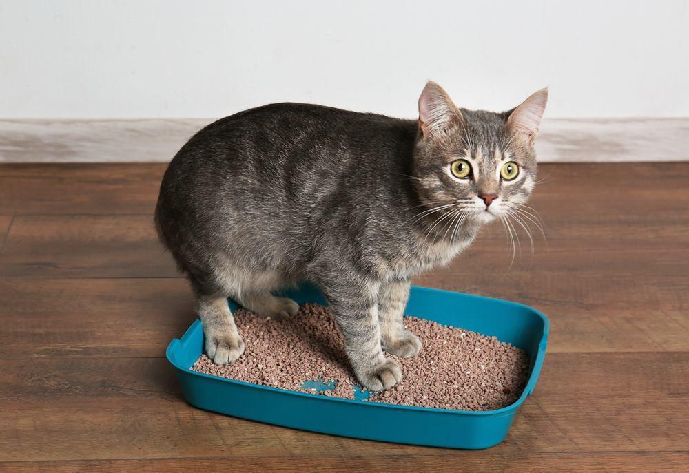 Энтеросгель для животных инструкция по применению