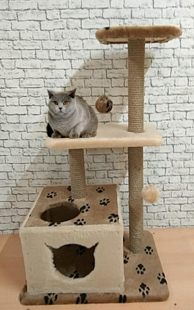 Чем выше игровой комплекс, тем спокойнее себя будет чувствовать кошка в недосягаемости