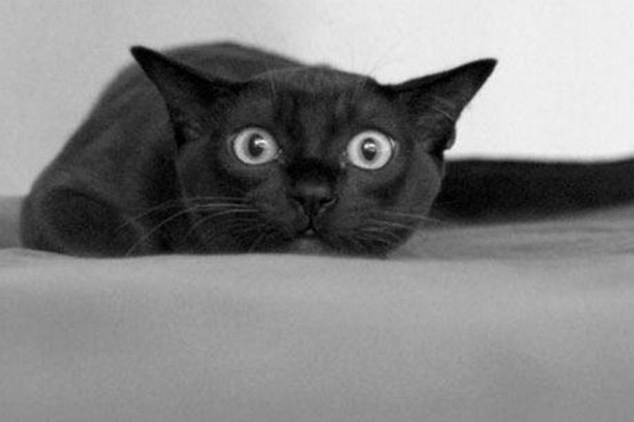 Черный нос для черного кота вполне естественен