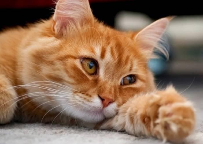 Чтобы кот правильно расшифровывал ваши указания, они должны быть последовательными и предсказуемыми