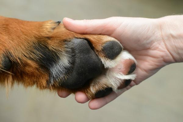 Чтобы улучшить процедуру подстригания когтей, узнайте, какая форма когтей у вашей собаки