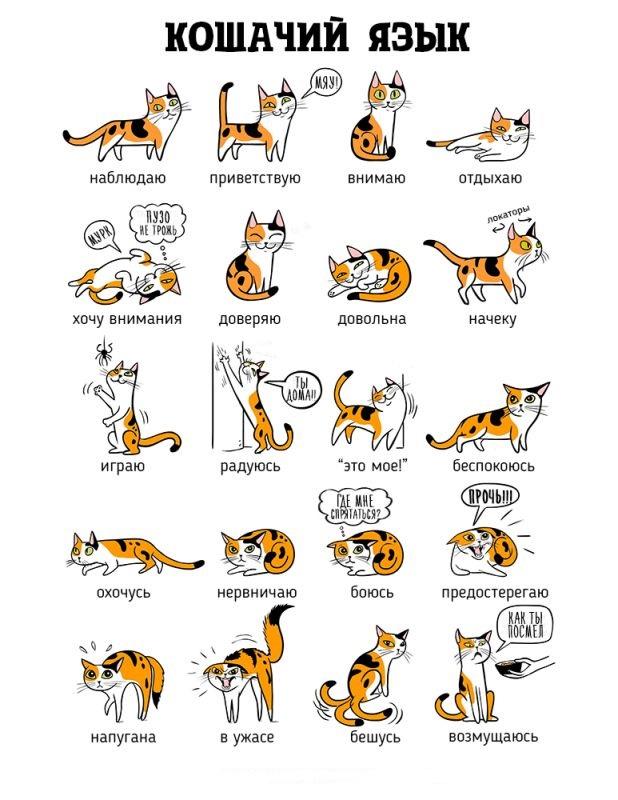 """Что """"говорит"""" кошка"""