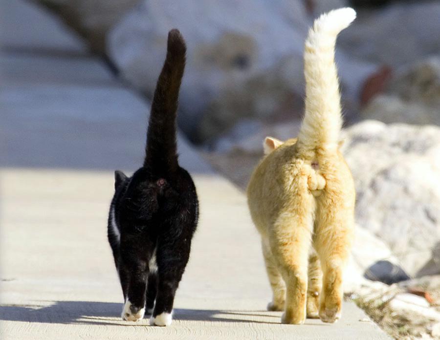 Чёрная кошка и рыжий кот