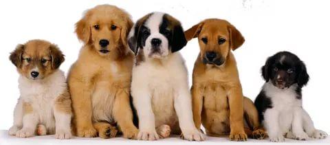 Щенки разных пород собак