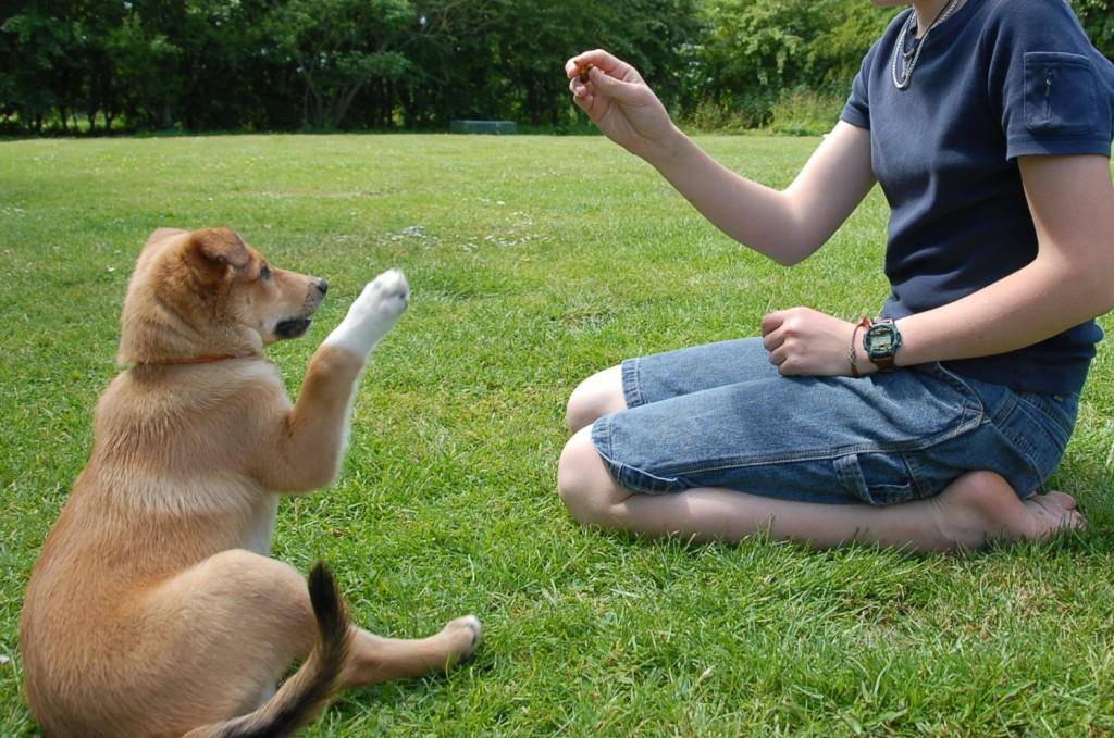 Щенок, к которому относятся с пониманием и любовью, будет безоговорочно слушаться хозяина