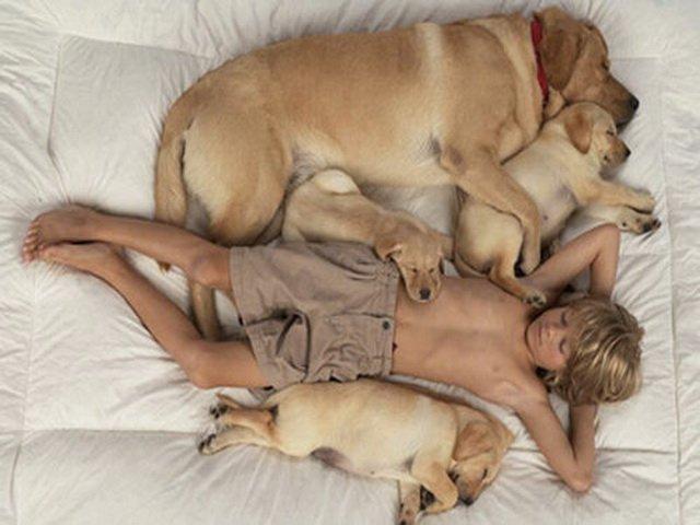 Экзема не передается ни людям, ни животным, окружающим больную собаку