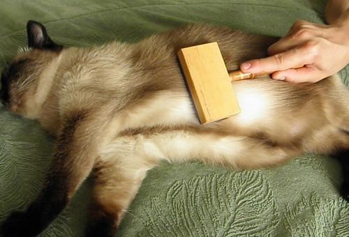 Эта кошка в восторге от процедуры вычёсывания