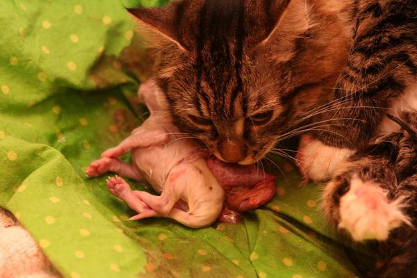 Эти котята появились на свет совсем недавно
