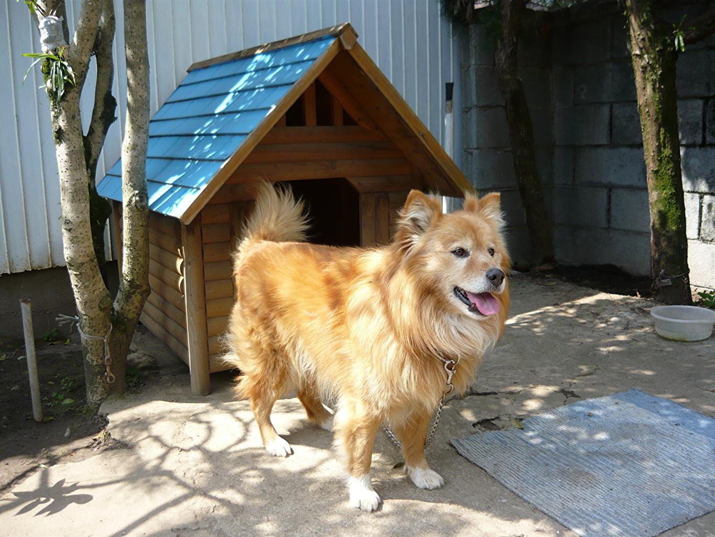 Этот пёс счастлив в своём жилище