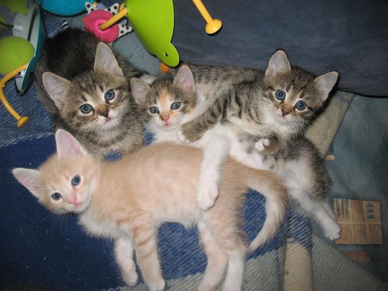 Юные котики редко бывают толстыми