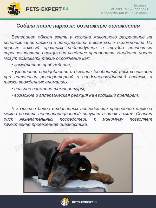Собака после наркоза: возможные осложнения