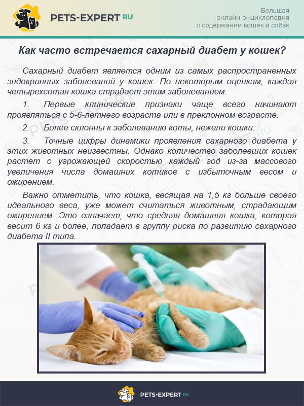Как часто встречается сахарный диабет у кошек?