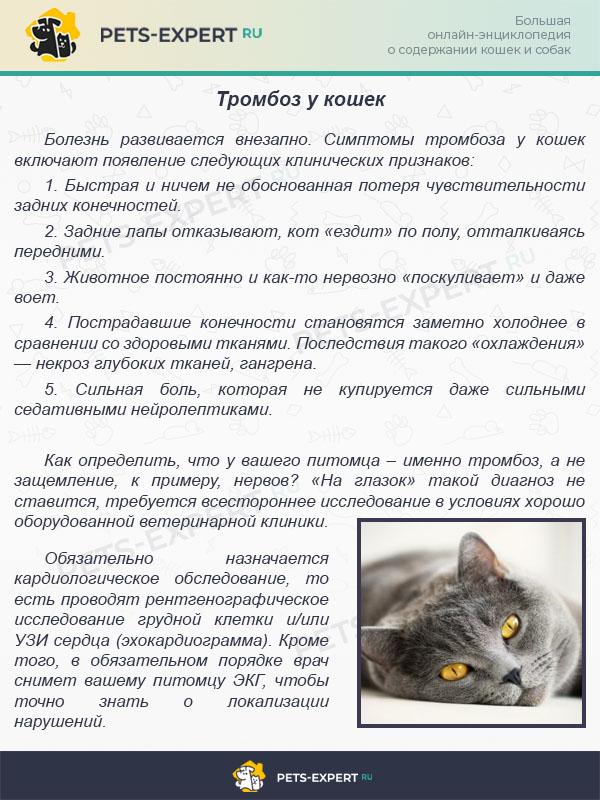Тромбоз у кошек