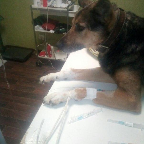 Как поставить капельницу собаке и кошке в домашних условиях
