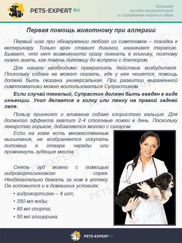 Первая помощь животному при аллергии