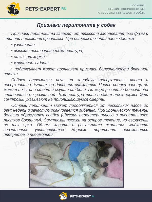Признаки перитонита у собак
