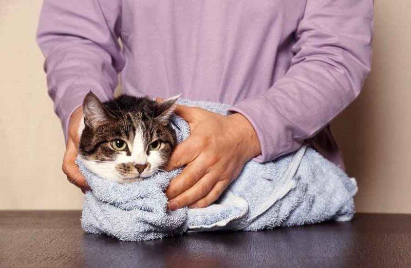 Для снижения температуры у кошки можно использовать холодный компресс