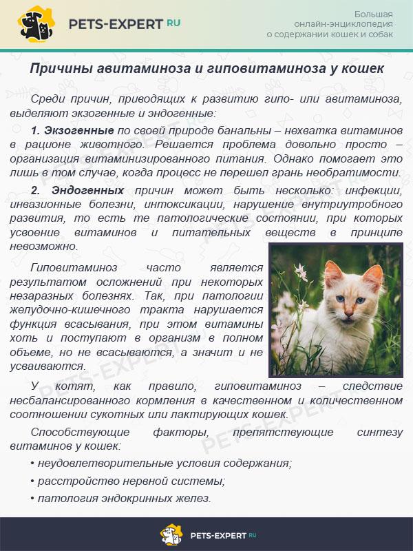 Причины авитаминоза и гиповитаминоза у кошек