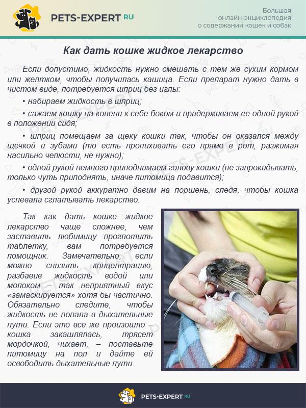 Как дать кошке жидкое лекарство