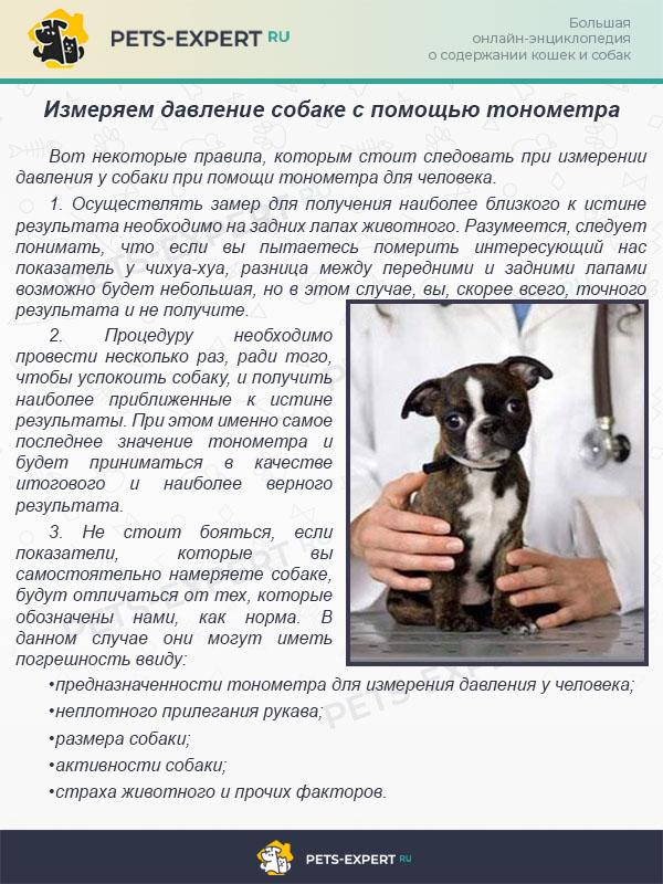 Измеряем давление собаке с помощью тонометра